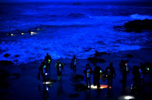 PADI Speciality Diver Courses Night dive Corralejo Abyss Fuerteventura